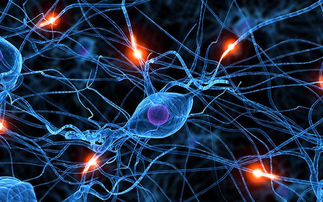 Nevroni v možganih